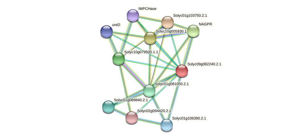 Solyc09g082240.2.1 protein (Solanum lycopersicum) - STRING interaction network