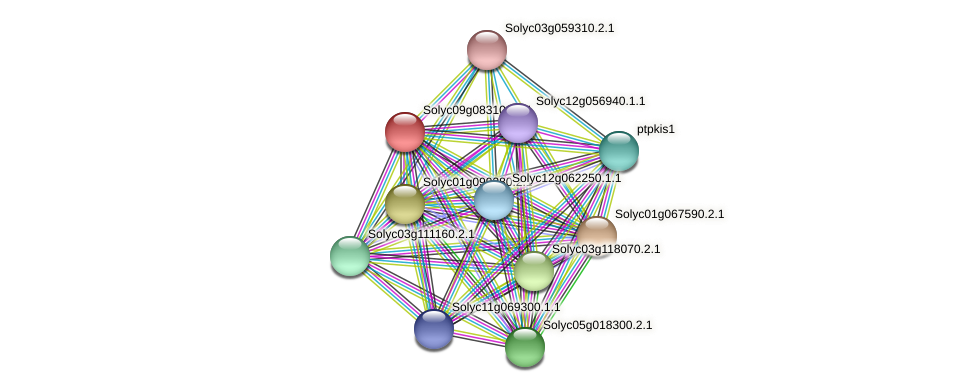 101264555 protein (Solanum lycopersicum) - STRING interaction network