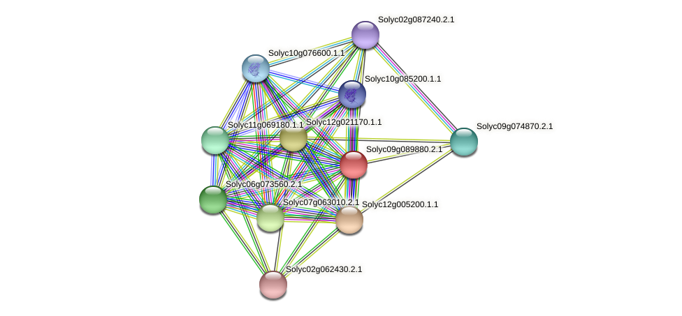 Solyc09g089880.2.1 protein (Solanum lycopersicum) - STRING interaction network
