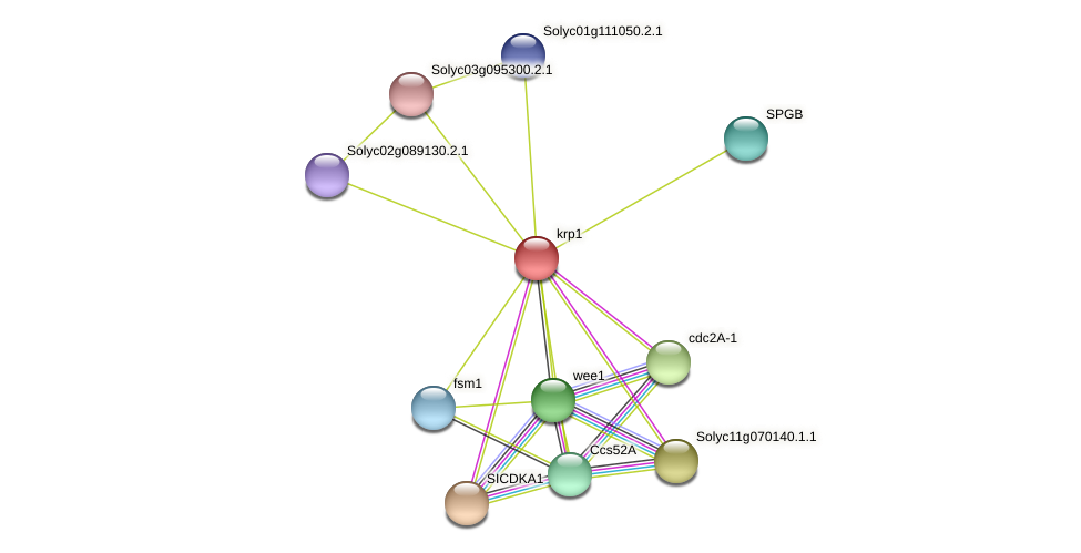 krp1 protein (Solanum lycopersicum) - STRING interaction network