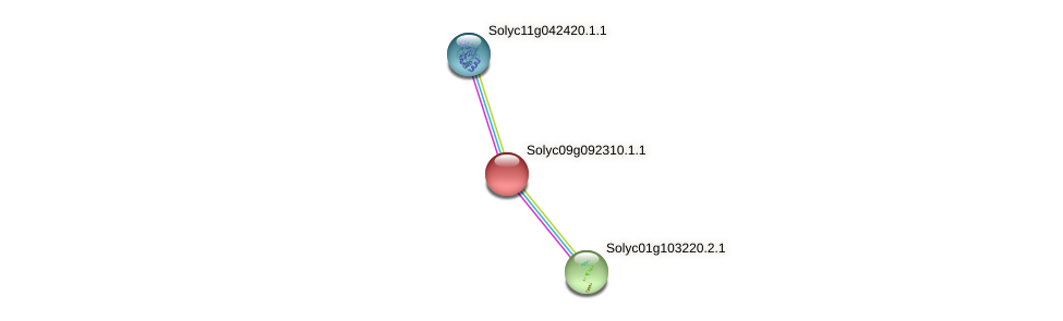 Solyc09g092310.1.1 protein (Solanum lycopersicum) - STRING interaction network