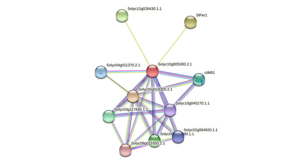 101257017 protein (Solanum lycopersicum) - STRING interaction network
