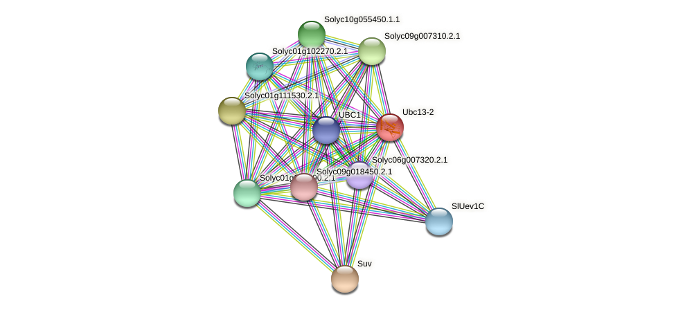 Ubc13-2 protein (Solanum lycopersicum) - STRING interaction network