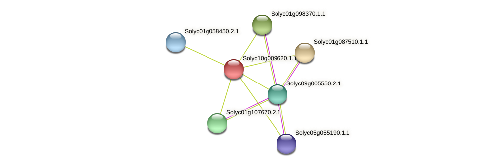 101250455 protein (Solanum lycopersicum) - STRING interaction network