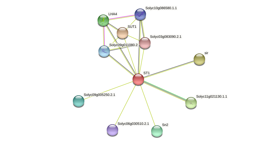 ST1 protein (Solanum lycopersicum) - STRING interaction network