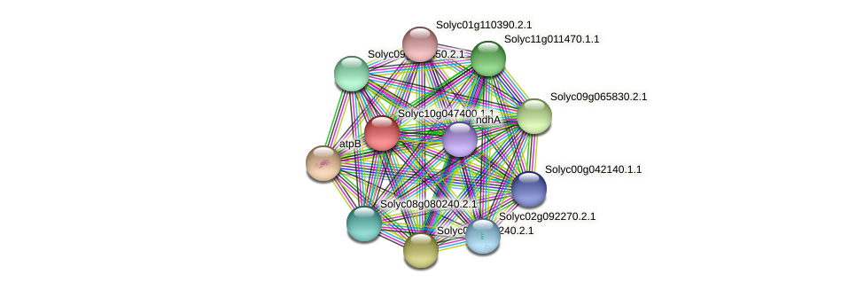 Solyc10g047400.1.1 protein (Solanum lycopersicum) - STRING interaction network