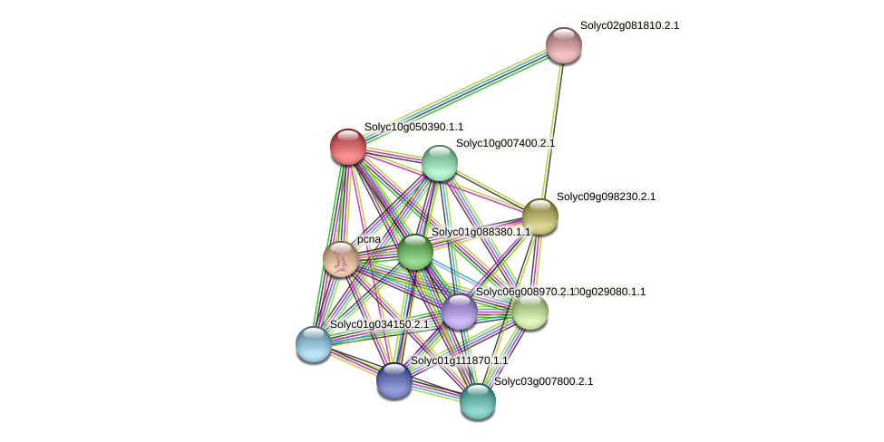 Solyc10g050390.1.1 protein (Solanum lycopersicum) - STRING interaction network