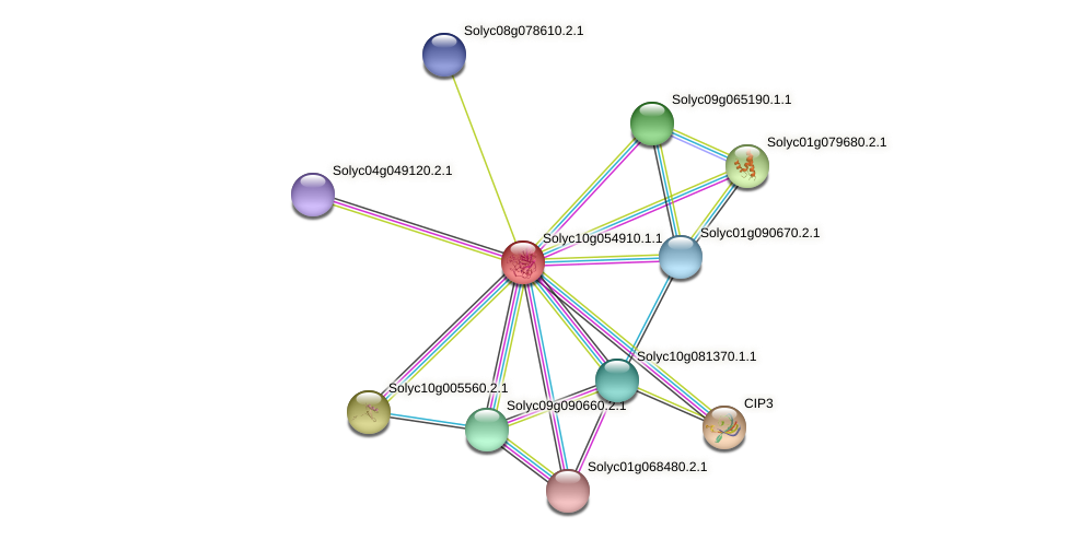 Solyc10g054910.1.1 protein (Solanum lycopersicum) - STRING interaction network