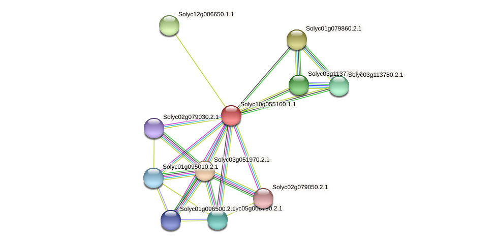 Solyc10g055160.1.1 protein (Solanum lycopersicum) - STRING interaction network