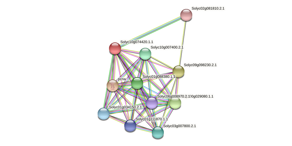 Solyc10g074420.1.1 protein (Solanum lycopersicum) - STRING interaction network