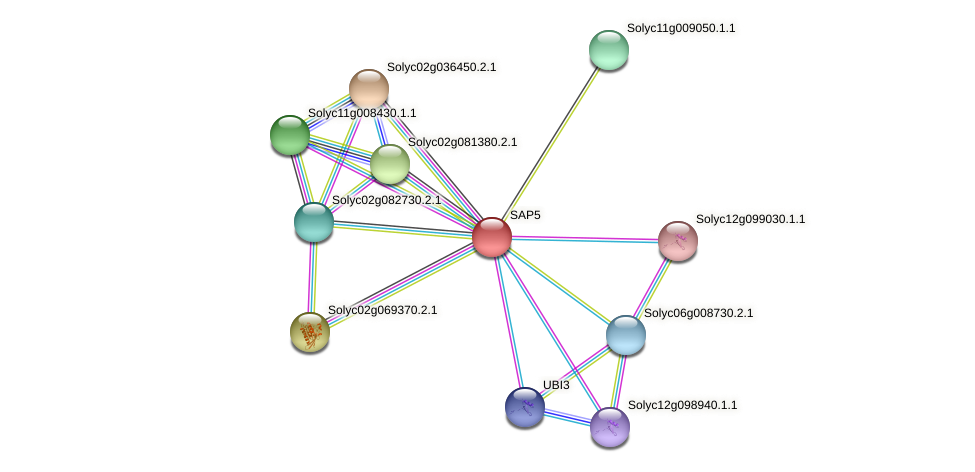 SAP5 protein (Solanum lycopersicum) - STRING interaction network
