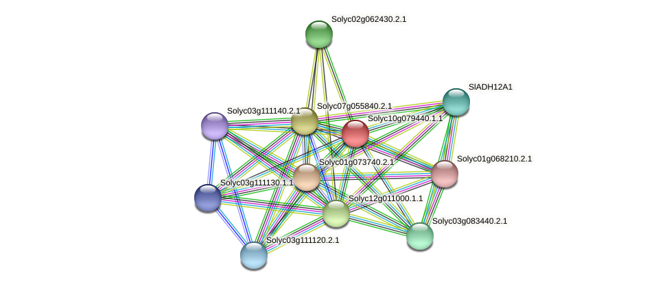 Solyc10g079440.1.1 protein (Solanum lycopersicum) - STRING interaction network