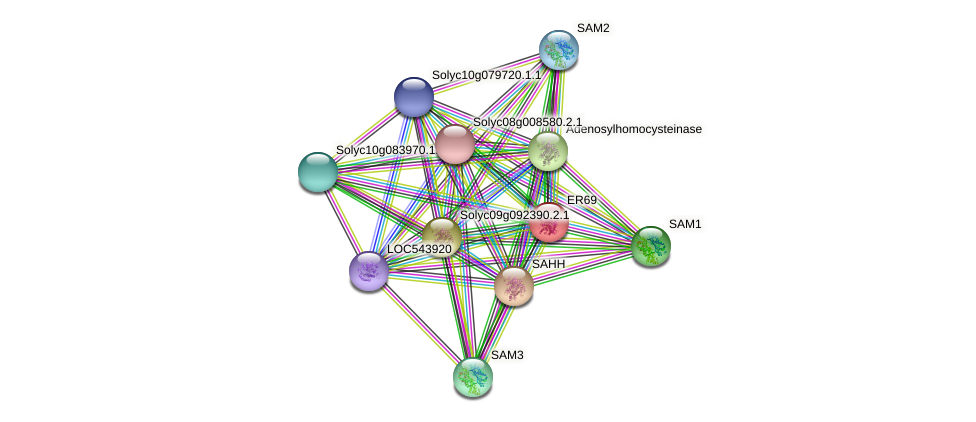 101264078 protein (Solanum lycopersicum) - STRING interaction network