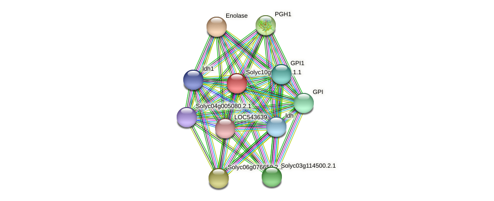 Solyc10g083720.1.1 protein (Solanum lycopersicum) - STRING interaction network