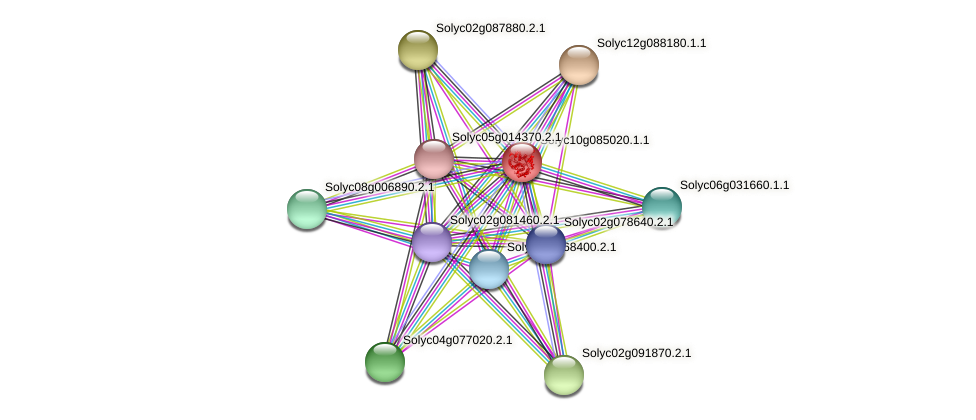 Solyc10g085020.1.1 protein (Solanum lycopersicum) - STRING interaction network