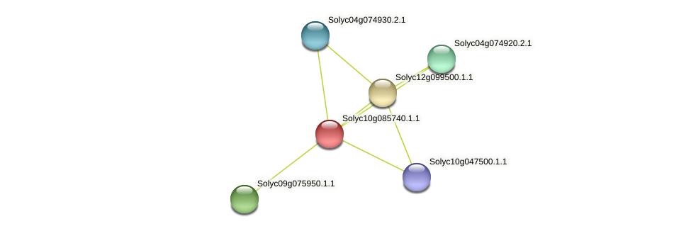 Solyc10g085740.1.1 protein (Solanum lycopersicum) - STRING interaction network