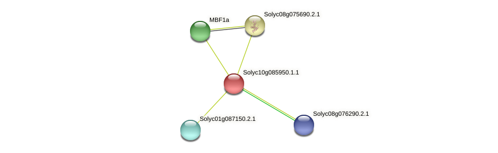 Solyc10g085950.1.1 protein (Solanum lycopersicum) - STRING interaction network
