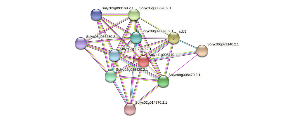 Solyc11g005110.1.1 protein (Solanum lycopersicum) - STRING interaction network