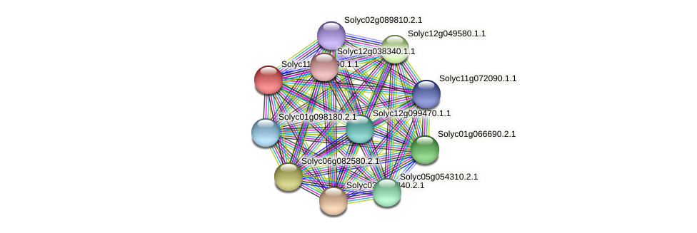 Solyc11g005600.1.1 protein (Solanum lycopersicum) - STRING interaction network