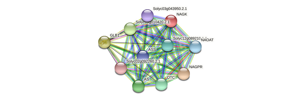 NAGK protein (Solanum lycopersicum) - STRING interaction network