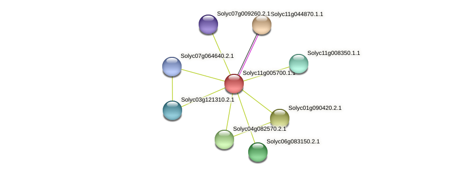 Solyc11g005700.1.1 protein (Solanum lycopersicum) - STRING interaction network