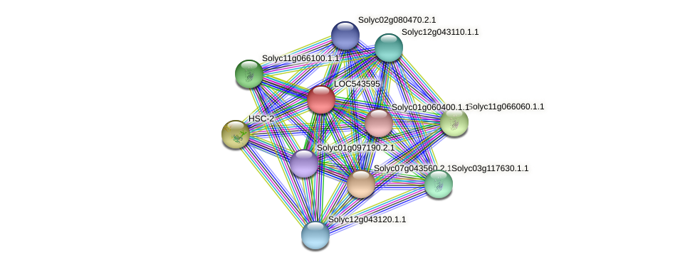 LOC543595 protein (Solanum lycopersicum) - STRING interaction network