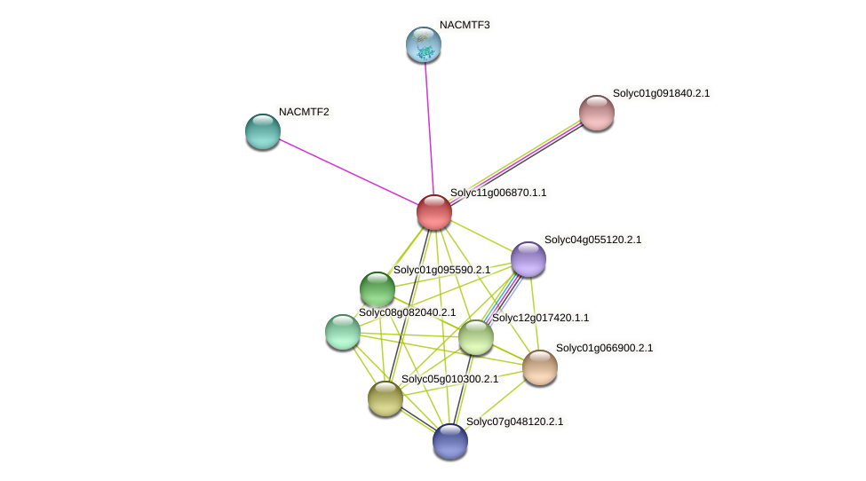 Solyc11g006870.1.1 protein (Solanum lycopersicum) - STRING interaction network