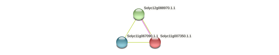 Solyc11g007350.1.1 protein (Solanum lycopersicum) - STRING interaction network