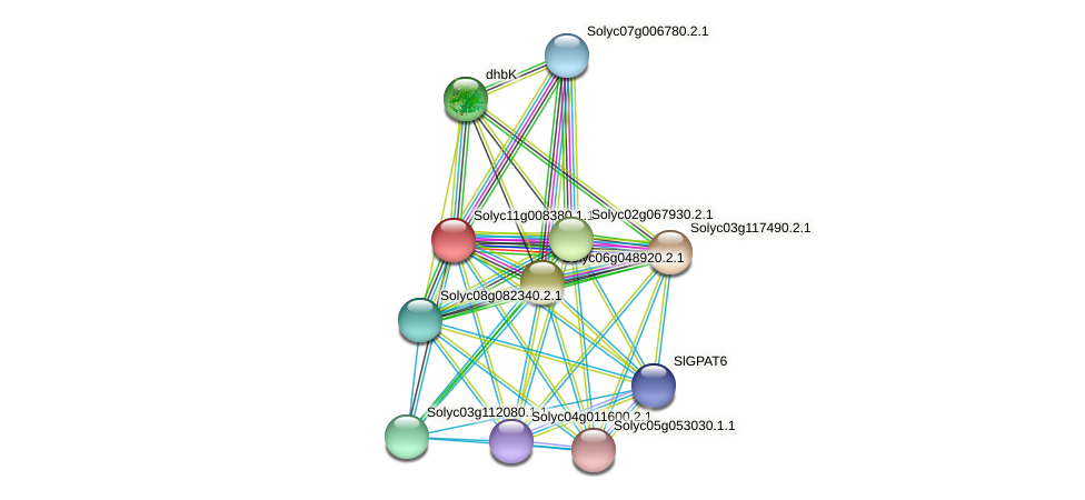 Solyc11g008380.1.1 protein (Solanum lycopersicum) - STRING interaction network