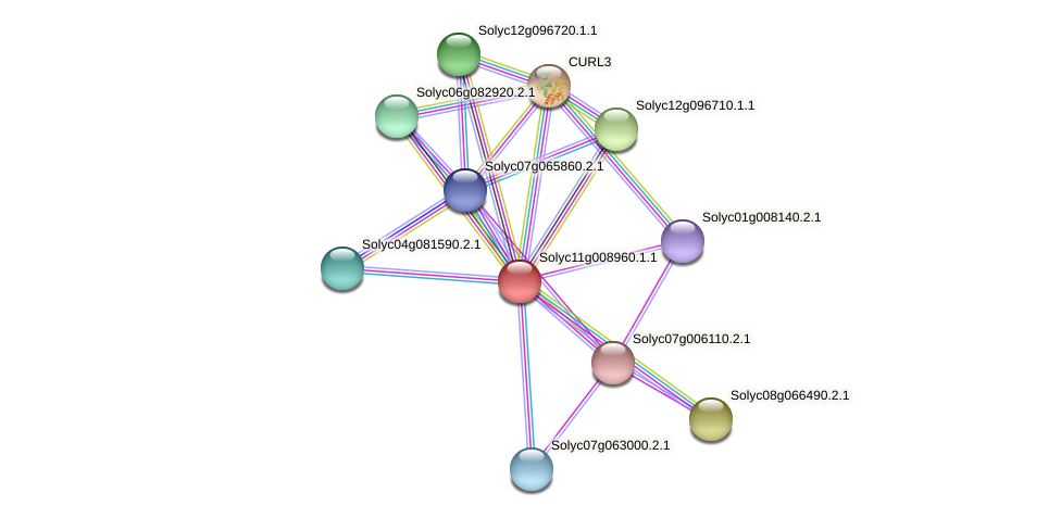 Solyc11g008960.1.1 protein (Solanum lycopersicum) - STRING interaction network