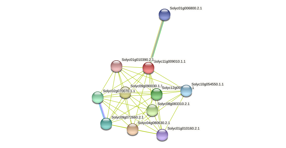 Solyc11g009010.1.1 protein (Solanum lycopersicum) - STRING interaction network