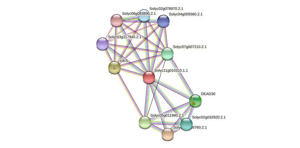 101260893 protein (Solanum lycopersicum) - STRING interaction network