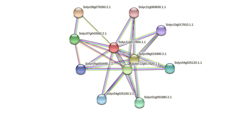 Solyc11g012900.1.1 protein (Solanum lycopersicum) - STRING interaction network