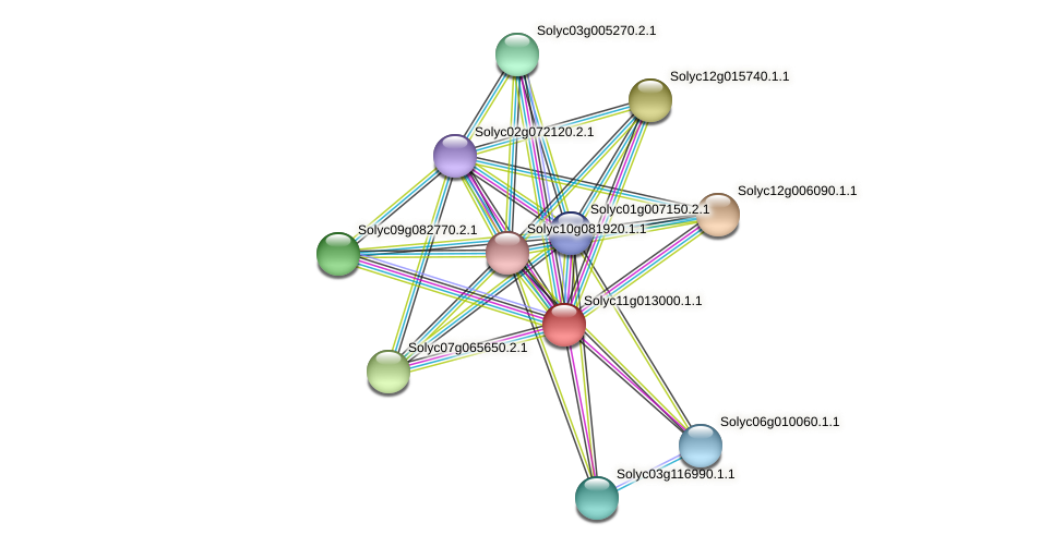 Solyc11g013000.1.1 protein (Solanum lycopersicum) - STRING interaction network