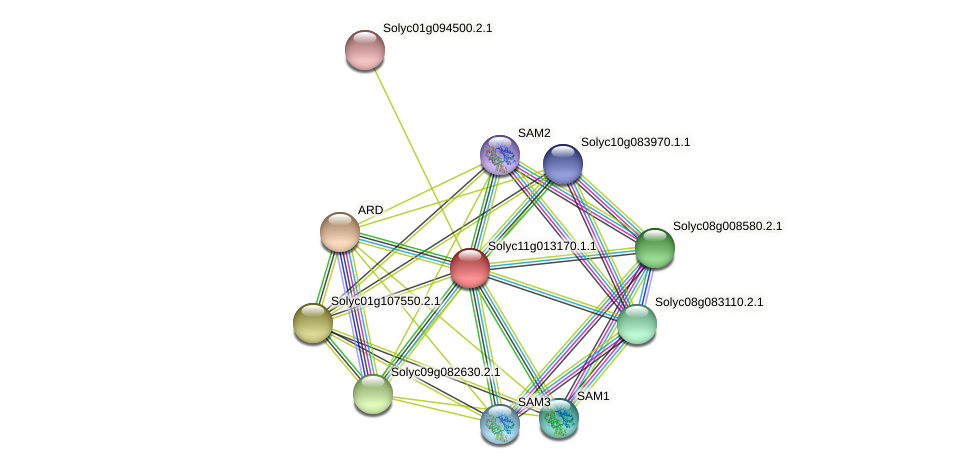 Solyc11g013170.1.1 protein (Solanum lycopersicum) - STRING interaction network