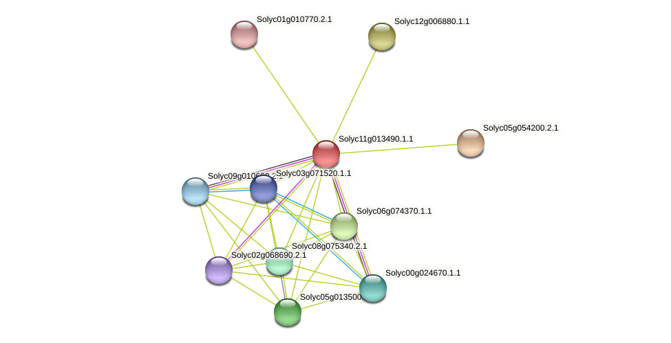 Solyc11g013490.1.1 protein (Solanum lycopersicum) - STRING interaction network
