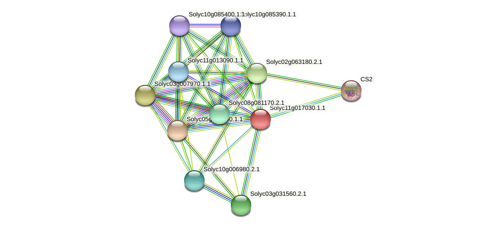 Solyc11g017030.1.1 protein (Solanum lycopersicum) - STRING interaction network