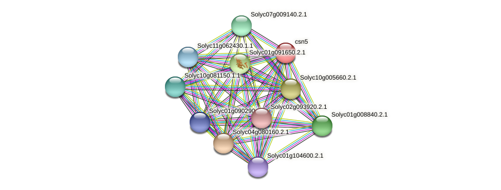 LOC543616 protein (Solanum lycopersicum) - STRING interaction network