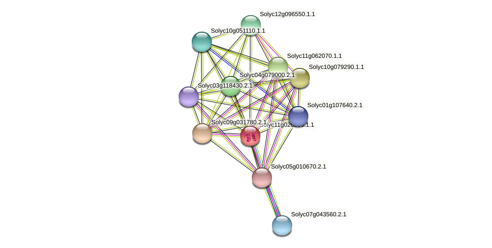 Solyc11g020300.1.1 protein (Solanum lycopersicum) - STRING interaction network