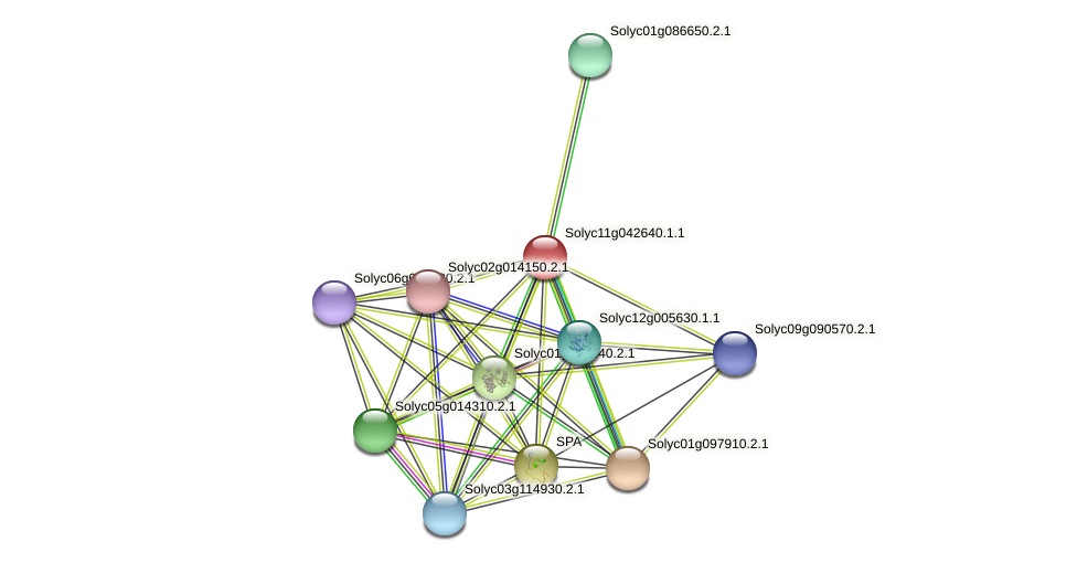 Solyc11g042640.1.1 protein (Solanum lycopersicum) - STRING interaction network