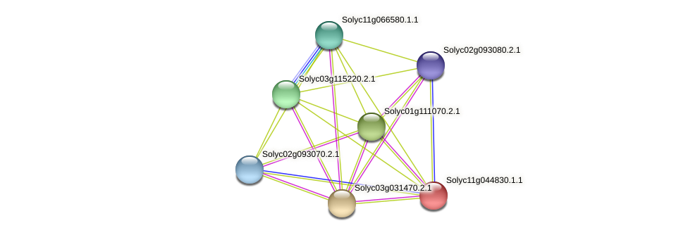 Solyc11g044830.1.1 protein (Solanum lycopersicum) - STRING interaction network