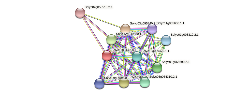Solyc11g044990.1.1 protein (Solanum lycopersicum) - STRING interaction network