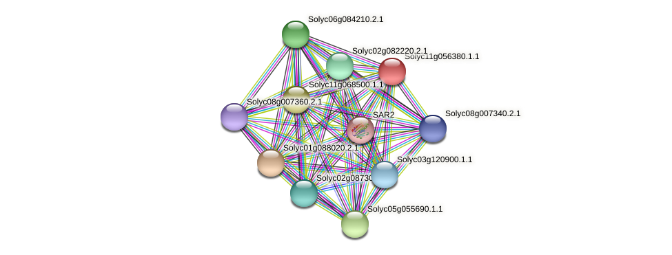 Solyc11g056380.1.1 protein (Solanum lycopersicum) - STRING interaction network