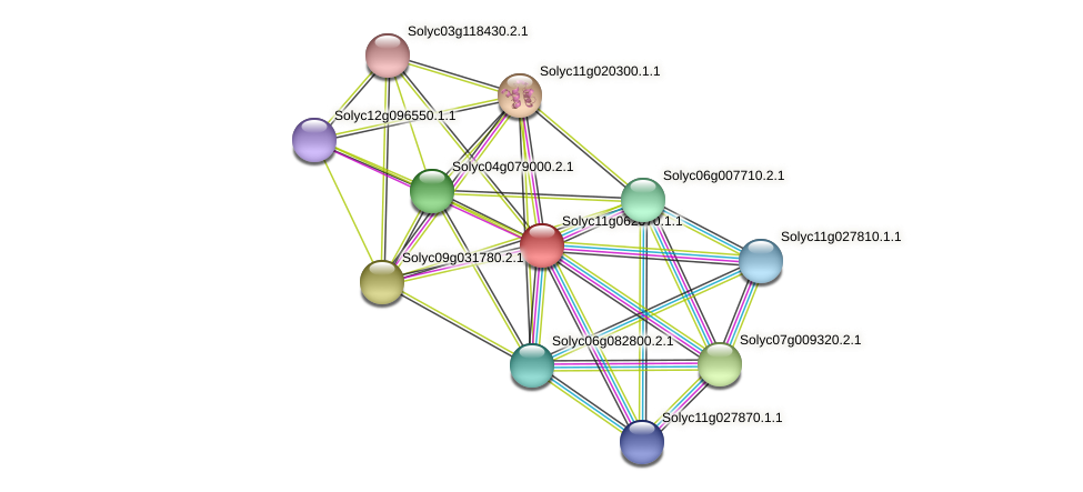 101254561 protein (Solanum lycopersicum) - STRING interaction network