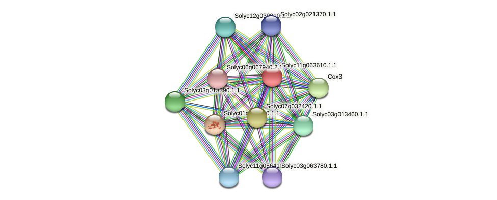 Solyc11g063610.1.1 protein (Solanum lycopersicum) - STRING interaction network