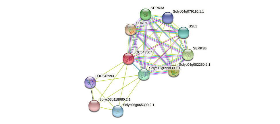 Solyc11g064890.1.1 protein (Solanum lycopersicum) - STRING interaction network