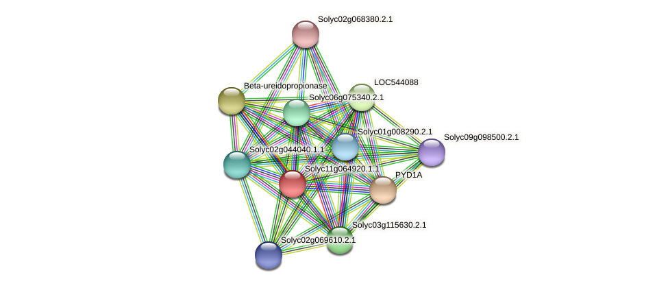 Solyc11g064920.1.1 protein (Solanum lycopersicum) - STRING interaction network