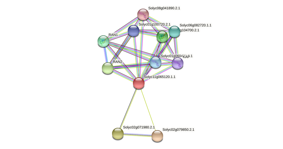 Solyc11g065120.1.1 protein (Solanum lycopersicum) - STRING interaction network