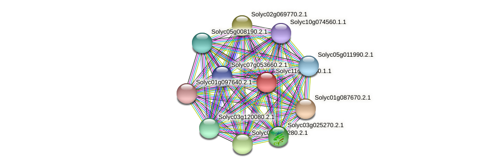 Solyc11g065960.1.1 protein (Solanum lycopersicum) - STRING interaction network
