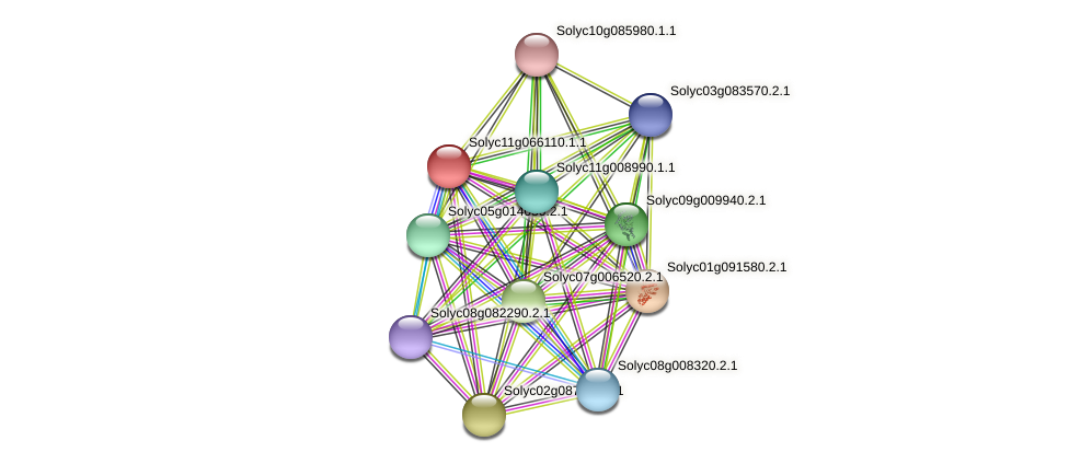 Solyc11g066110.1.1 protein (Solanum lycopersicum) - STRING interaction network